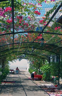 В тени живописной цветочной арки