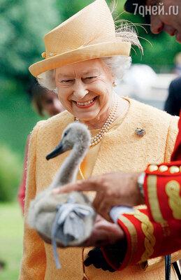 ...зато все лебеди на Темзе — личная собственность королевы