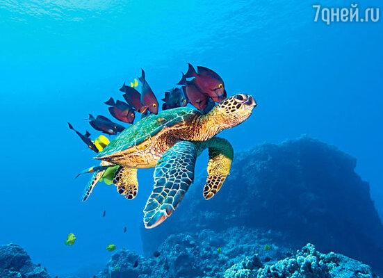 «Большое путешествие вглубь океанов 3D»