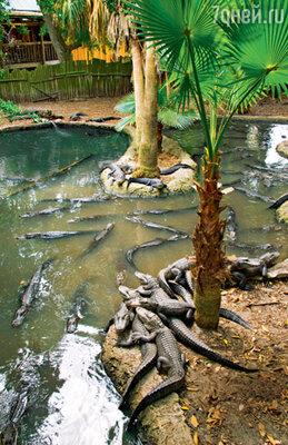 Знаменитая крокодилья ферма во Флориде — настоящий рай для рептилий