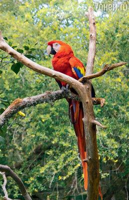В крокодильем зоопарке великолепно чувствуют себя и экзотические попугаи