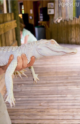 В уникальной, самой полной в мире живой коллекции есть даже крокодилы-альбиносы
