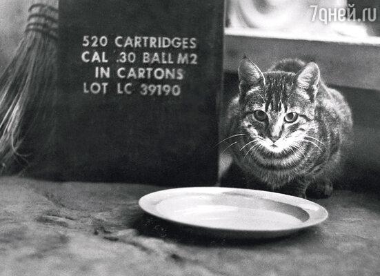 Это мой боевой друг. Я даже как-то сделал его портрет. На память… Кот сидел на столе рядом с тарелкой молока и коробкой из-под патронов