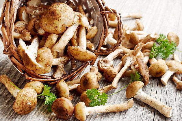 Опята грибы