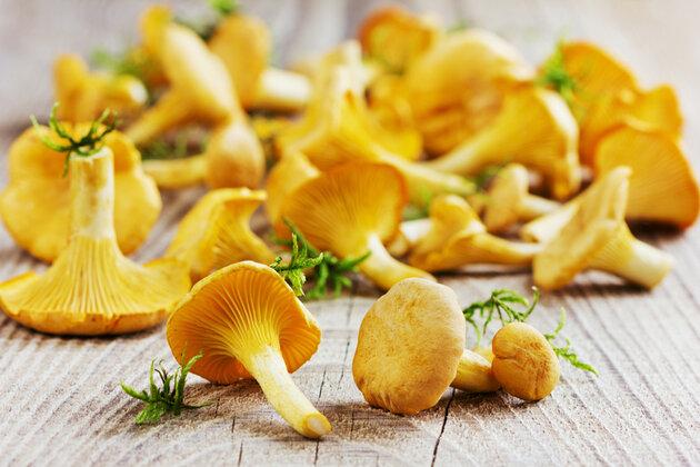 Лисички грибы