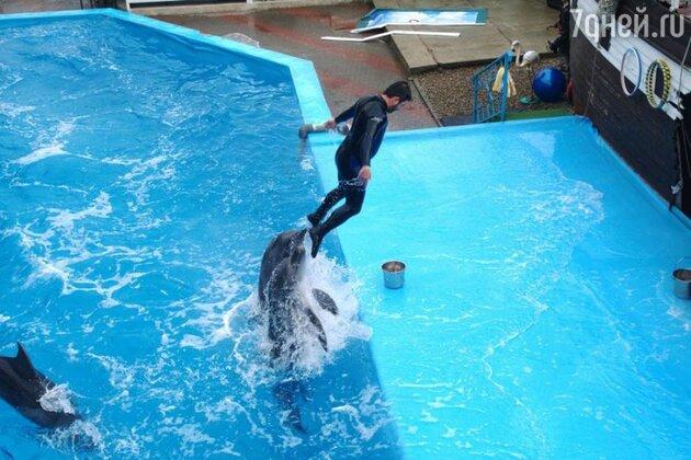 Михаил Галустян тренируется в дельфинарии
