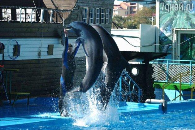 Михаилу Галустяну предстояло выйти с дельфинами в открытое море