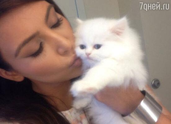 Ким Кардашьян с ангорским котенком Мерси
