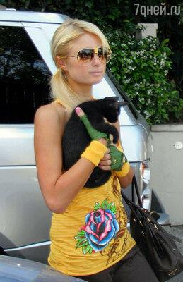 Пэрис Хилтон и бразильская короткошерстная кошка