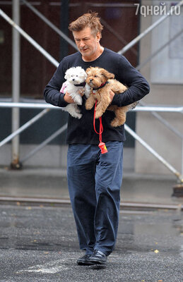Алек выгуливает своих любимцев в любую погоду. Нью-Йорк, октябрь 2012 г.