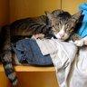 Кругом такие утомительные домашние дела