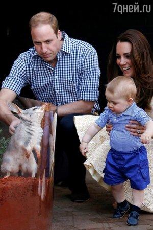Кейт Миддлтон и принц Уильям вместе с их 8-месячным сыном Джорджем посетили сиднейский зоопарк Taronga Zoo