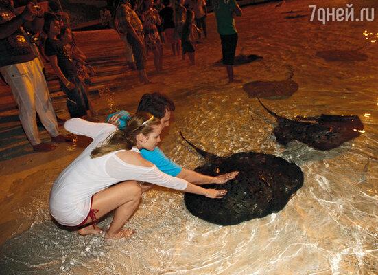 Вечером на берегу океана можно покормить рыбой прирученных скатов