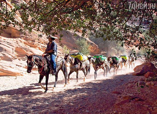 Спуск на дно каньона на мулах — одно из популярнейших развлечений