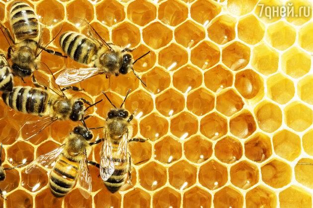 Пчелы, мёд