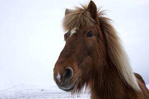 Зачем коню губы?!