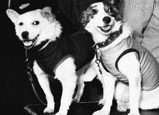Белка и Стрелка – звездные собаки