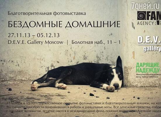 27 ноября состоится открытие выставки «Бездомные Домашние»