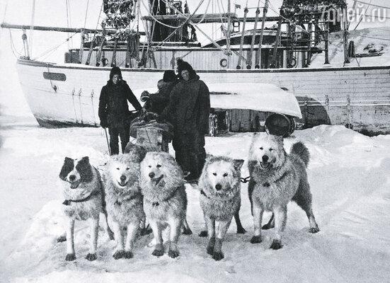Знаток полярных пустынь Руаль Амундсен. Человек, много раз ставивший на кон свою жизнь и пока что обыгрывавший смерть
