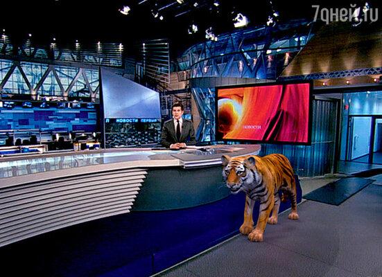 С помощью новых технологий на китайский Новый год в студию «пустили гулять» тигра. Взволнованные телезрительницы оборвали телефоны: как же вы можете рисковать жизнью ведущих?!