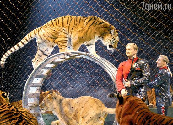 «Работа с хищниками — опасное дело. Отца несколько раз рвали тигры, а деда они загрызли насмерть...»