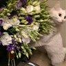 Питомца Влада Лисовца зовут Белка: и этому белому комочку точно не привыкать к повышенному вниманию!
