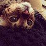 Своего кота Виктория Боня назвала Султаном