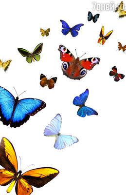 «Один мужчина подарил мне на 8 марта на первый взгляд совершенно обыкновенную коробку, перевязанную бантом, — вспомнила певица Анна Семенович. — Когда я ее открыла, из нее по всей гримерке разлетелись десятки красочных бабочек. Это было очень эффектно и запомнилось надолго»
