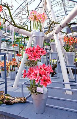 В оранжереях проходят уникальные шоу теплолюбивых цветов