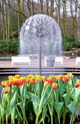 Тюльпаны — национальная гордость Нидерландов и главное украшение королевского сада