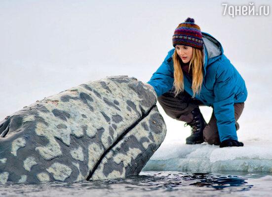 Кадр из фильма «Все любят китов»