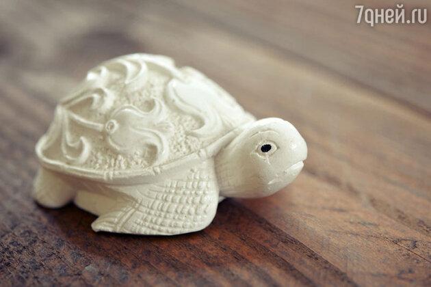 Черепаха — символ равновесия