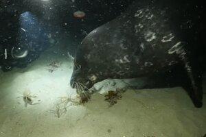 Непредсказуемый финал схватки между осьминогом и крабом