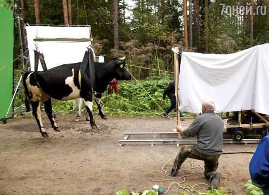 С помощью компьютерных эффектов эта корова должна будет взлететь под облака