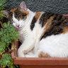 Лучшее место для сна котов