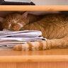 Заснул в укрытии
