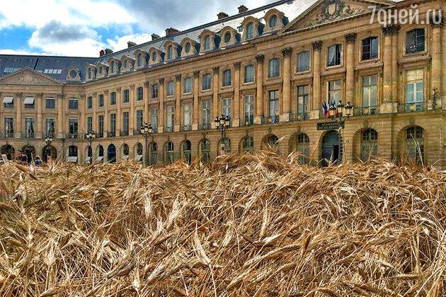 Пшеничное поле на Вандомской площади