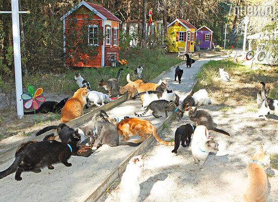 Кошки живут в домах со всеми удобствами. В некоторых из них имеются даже кондиционеры: летом животным не жарко, а зимой тепло