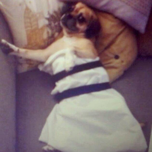 Пародия на платье Дженнифер Лоуренс на «Золотом глобусе»