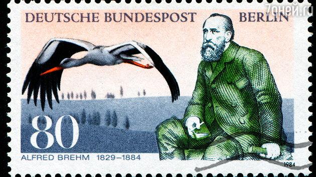 Почтовая марка, выпущенная в ГДР к столетию со дня смерти Альфреда Брема
