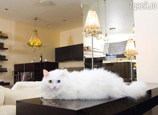 Главный обитатель квартиры — не вечно отсутствующий хозяин, а кошка Муся. Вбольшой гостиной, где прошло немало шумных вечеринок