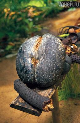 Кокосовый орех коко-де-мер, отчетливо напоминающий... попу, — символ Сейшел. Его можно увидеть и на визе, которую вам поставят прямо в аэропорту