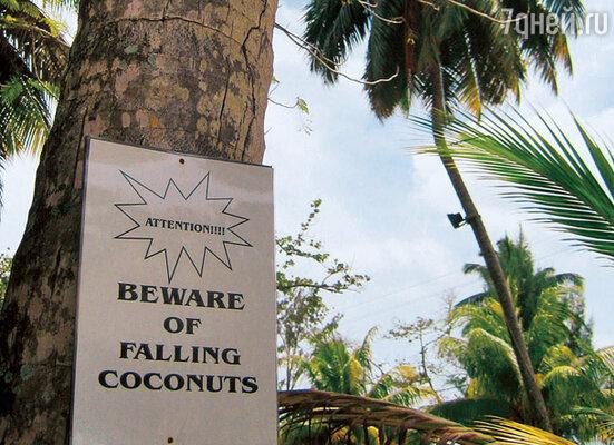 Вывеска гласит: «Опасайтесь падающих кокосов»