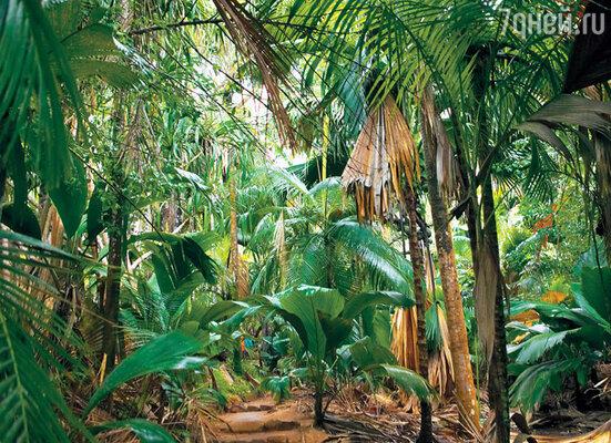 Заповедные джунгли на острове Праслен