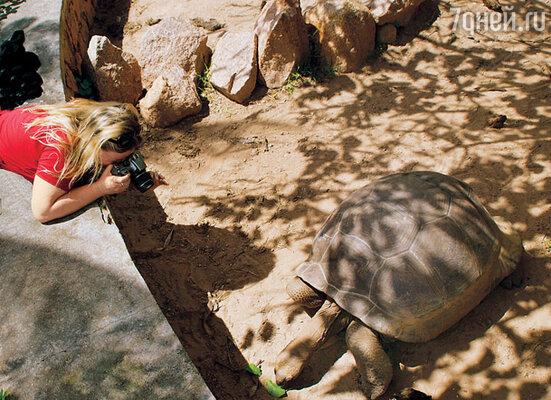 Огромные 500-килограммовые черепахи могут встретиться вам прямо на дороге
