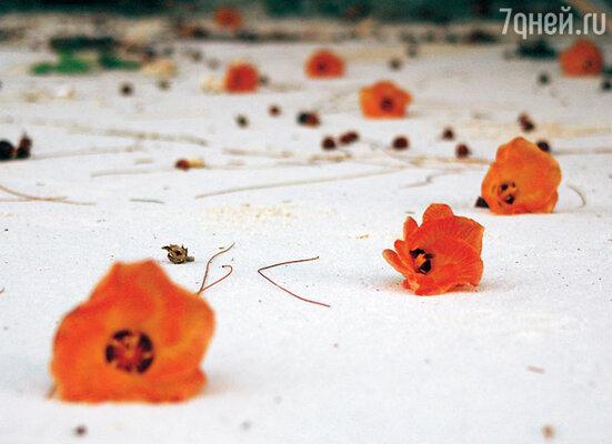 Кажется, что опавшие после дождя цветы лежат на снегу, а между тем такой белый на Сейшелах песок