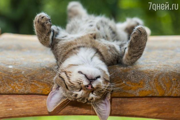 Веселая кошка