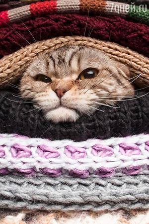 Недовольный котэ