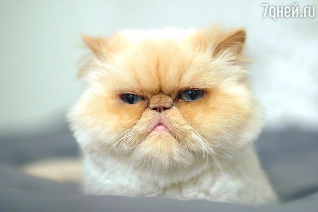 Нахмурившийся кот
