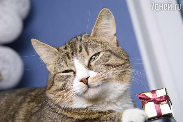 Улыбчивый кот